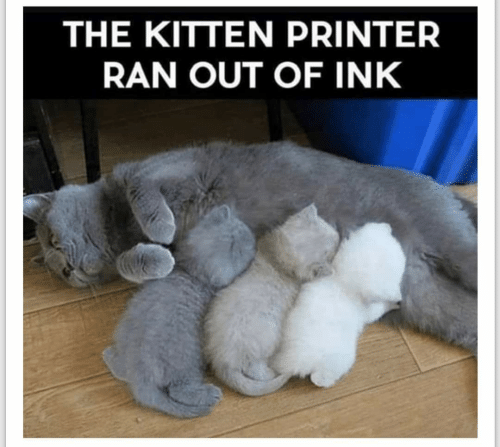The KITTEN PRINTER RAN OUT OF INK | Printer Meme on ME.ME