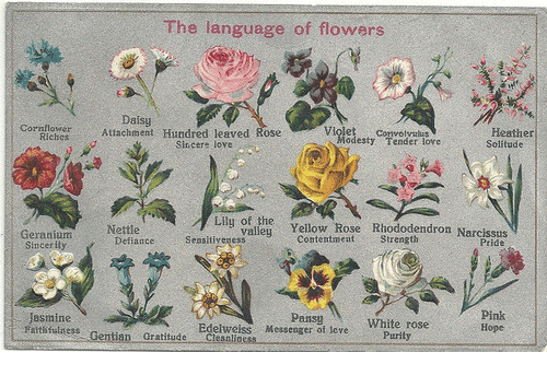 Love, Flowers, and Messenger: The language of flowers  Attachment Hundred leaved aose  Daisy  wH  Heather  Solitude  Violet Convolyalus  Cornflower  odesty Tender lore  Sincere love  i Yellow Rose Riododendron Narcssdis  Nettle  Pride  Geranium  Sincerity  ContentmentStrength  DefianceSeasitiyeness  Pansy  Messenger of tove  Pink  Hope  Jasmine  atsthilness Gentian Gratitude Clesnliness  Edelweiss  Purily