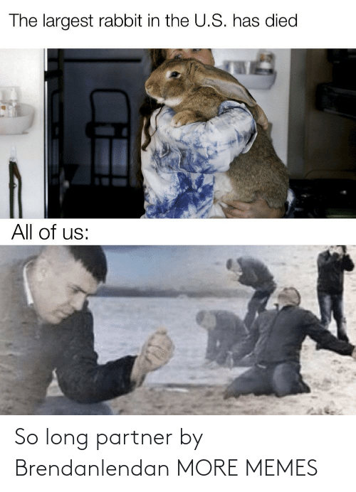 Dank, Memes, and Target: The largest rabbit in the U.S. has died  All of us: So long partner by Brendanlendan MORE MEMES