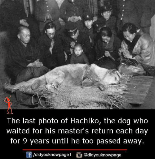 Memes, Masters, and 🤖: The last photo of Hachiko, the dog who  waited for his master's return each day  for 9 years until he too passed away.  /d.dyouknowpagel。@didyouknowpage