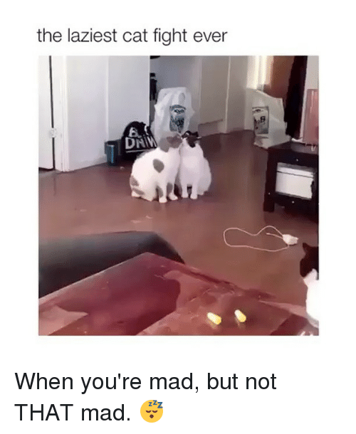 Girl, Mad, and Fight: the laziest cat fight ever  6. When you're mad, but not THAT mad. 😴