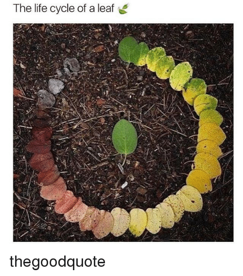 Life, Memes, and 🤖: The life cycle of a leaf thegoodquote