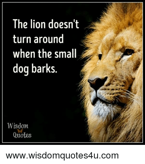 the lion doesn t turn around when the small dog barks wisdom
