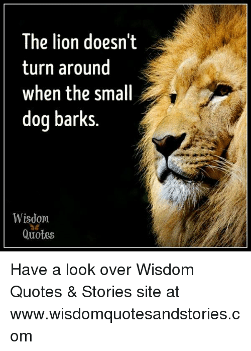 Lion Quotes The Lion Doesnt Turn Around When the Small Dog Barks Wisdom ไอ้  Lion Quotes