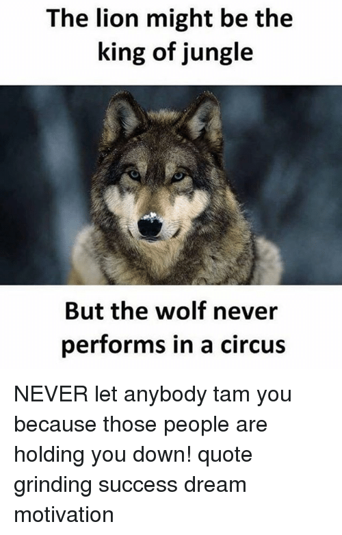 The Lion Might Be The King Of Jungle But The Wolf Never Performs In