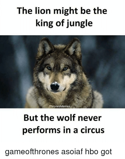 Hbo, Memes, and Lion: The lion might be the  king of jungle  Thrones Memes  But the wolf never  performs in a circus gameofthrones asoiaf hbo got