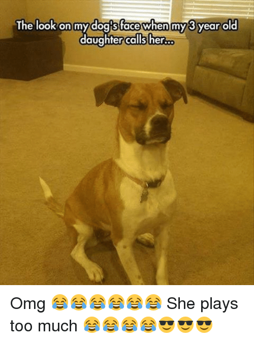 the look on my dog face when my 3 year 14804410 ✅ 25 best memes about funny dog faces funny dog faces memes,Funny Dog Face Meme