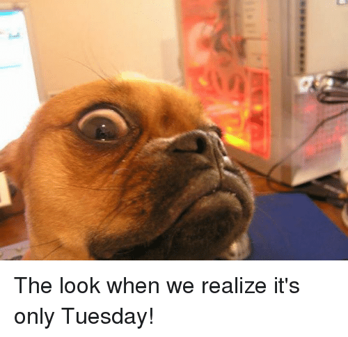 Memes, 🤖, and The Look: The look when we realize it's only Tuesday!