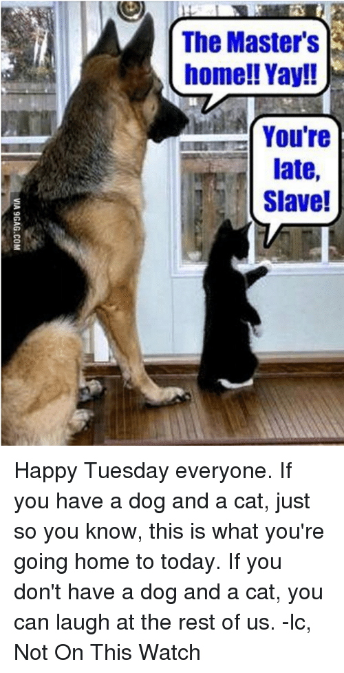 The Master S Home Yay You Re Late Slave Happy Tuesday Everyone If You Have A Dog And A Cat Just So You Know This Is What You Re Going Home To Today If You Share the best gifs now >>>. meme