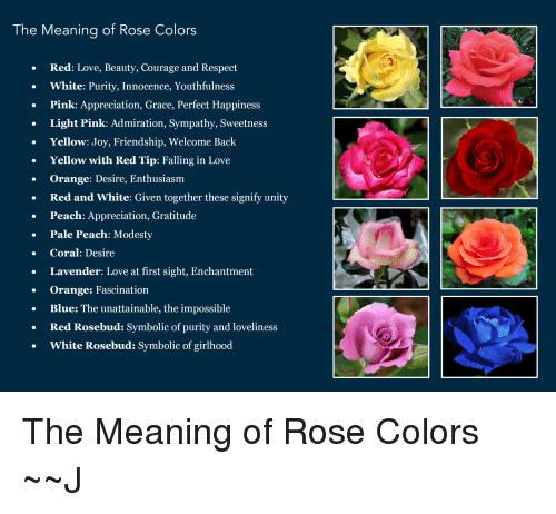 Love Memes And Respect The Meaning Of Rose Colors Red
