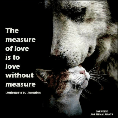 The Measure Of Love Is To Love Without Measure Attributed