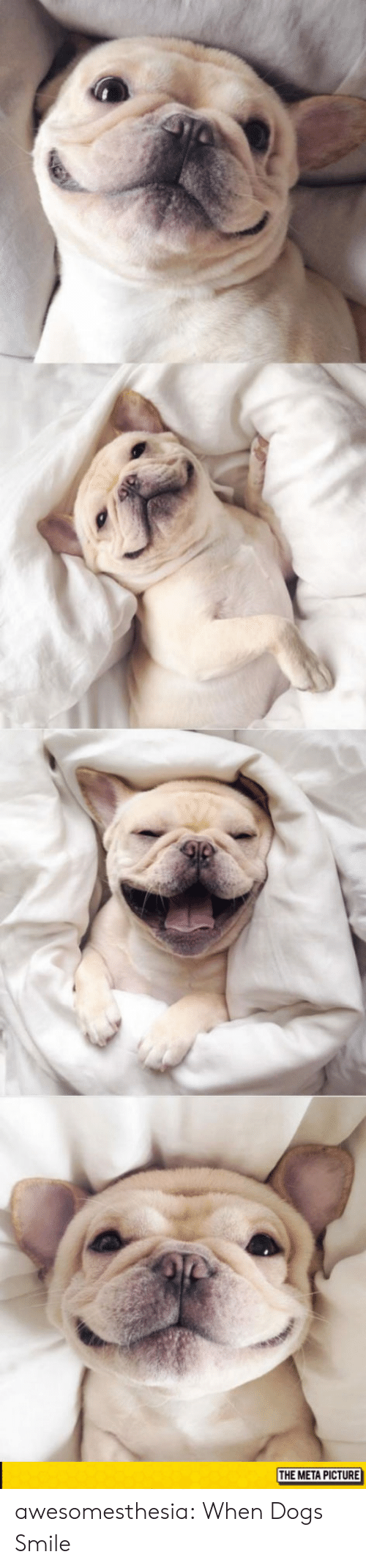 Dogs, Tumblr, and Blog: THE META PICTURE awesomesthesia:  When Dogs Smile