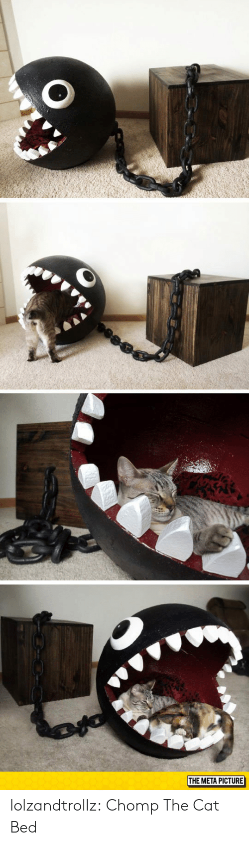Tumblr, Blog, and Cat: THE META PICTURE lolzandtrollz:  Chomp The Cat Bed
