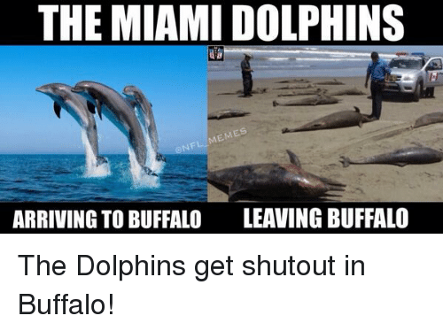 the miami dolphins memes arriving to buffalo leaving buffalo the 11293 ✅ 25 best memes about miami dolphins meme miami dolphins memes