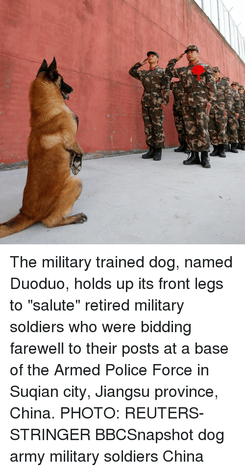 """Memes, Police, and Soldiers: The military trained dog, named Duoduo, holds up its front legs to """"salute"""" retired military soldiers who were bidding farewell to their posts at a base of the Armed Police Force in Suqian city, Jiangsu province, China. PHOTO: REUTERS-STRINGER BBCSnapshot dog army military soldiers China"""