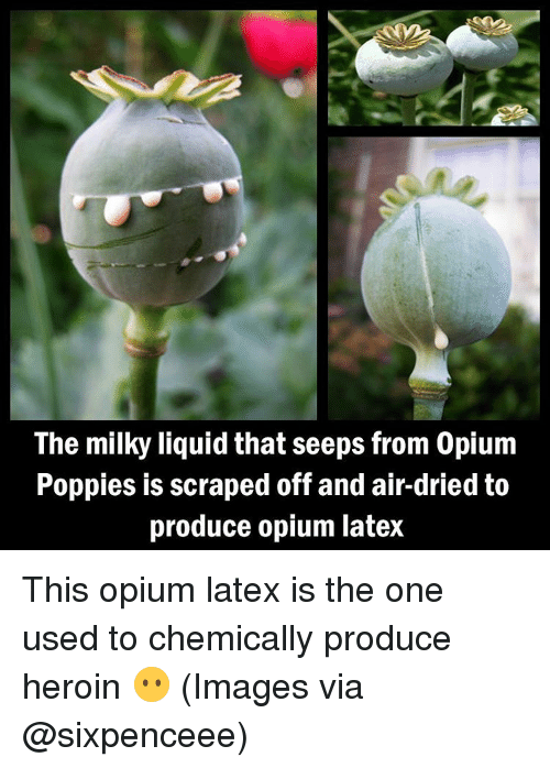 Heroin, Memes, and Poppies: The milky liquid that seeps from 0pium  Poppies is scraped off and air-dried to  produce opium latex This opium latex is the one used to chemically produce heroin 😶 (Images via @sixpenceee)