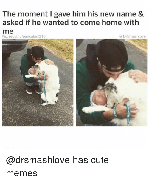 Cute, Funny, and Memes: The moment I gave him his new name &  asked if he wanted to come home with  me  Pic: reddit u/pancake 1210  @DrSmashlove @drsmashlove has cute memes