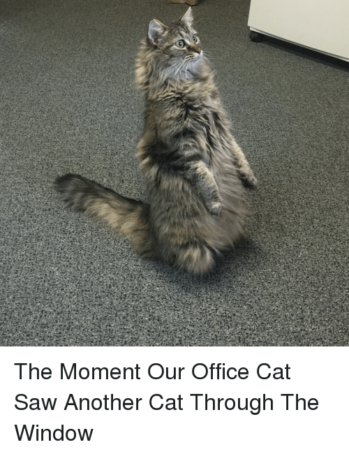 The Moment Our Office Cat Saw Another Cat Through The Window Funny