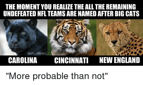 """Cats, England, and Football: THE MOMENT YOU REALIZE THE ALLTHE REMAINING  UNDEFEATED NFL TEAMS ARE NAMEDAFTER BIG CATS  @NFL MEMES  CAROLINA  CINCINNATI NEW ENGLAND """"More probable than not"""""""