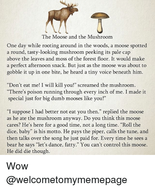 "Dumb, Memes, and Wow: The Moose and the Mushroom  One day while rooting around in the woods, a moose spotted  a round, tasty-looking mushroom peeking its pale cap  above the leaves and moss of the forest floor. It would make  a perfect afternoon snack. But just as the moose was about to  gobble it up in one bite, he heard a tiny voice beneath him  ""Don't eat me! I will kill you!"" screamed the mushroom  There's poison running through every inch of me. I made it  special just for big dumb mooses like you!""  ""I suppose I had better not eat you then."" replied the moose  as he ate the mushroom anyway. Do you think this moose  cares? He's here for a good time, not a long time. ""Roll the  dice, baby"" is his motto. He pays the piper, calls the tune, and  then talks over the song he just paid for. Every time he sees a  bear he says ""let's dance, fatty."" You can't control this moose.  He did die though Wow @welcometomymemepage"