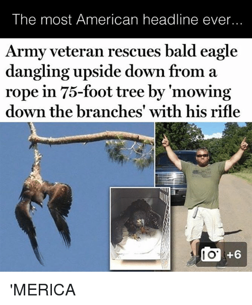 Army, American, and Eagle: The most American headline ever...  Army veteran rescues bald eagle  dangling upside down from a  rope in 75-foot tree by 'mowing  down the branches' with his rifle 'MERICA
