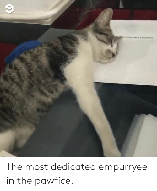 Dank, 🤖, and  Dedicated: The most dedicated empurryee in the pawfice.