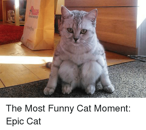 Funny Epic And Cat The Most Funny Cat Moment Epic Cat