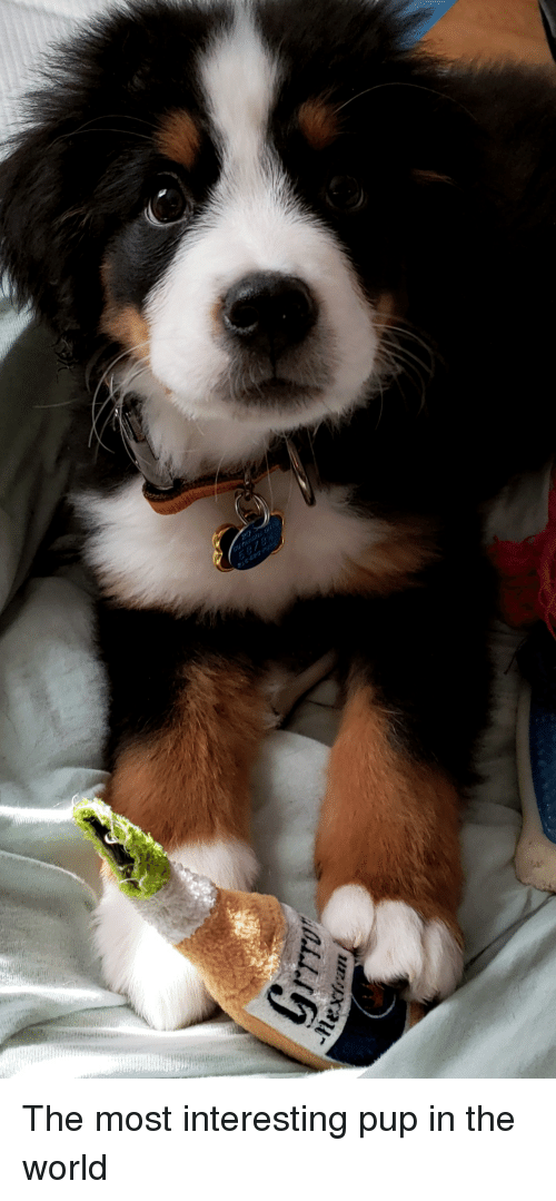 World, Pup, and The World: The most interesting pup in the world