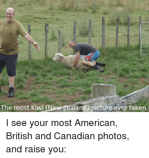 the most kiwi new zealand picture ever taken i see 3199306 - Free funny new zealand photos