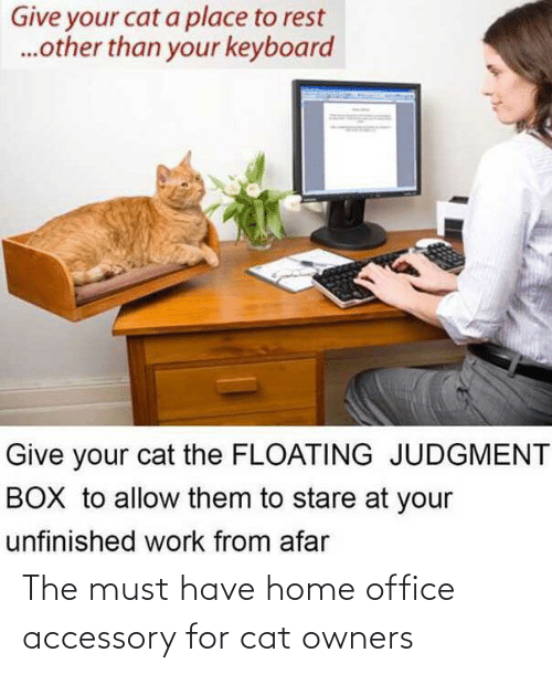 Home, Office, and Cat: The must have home office accessory for cat owners