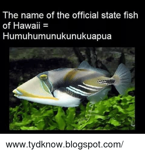 The Name of the Official State Fish of Hawaii ...