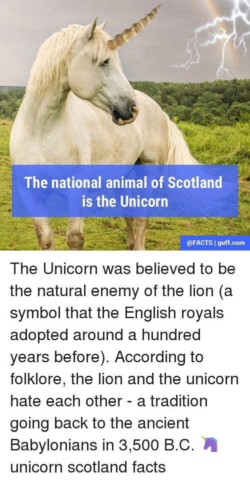 Image of: Mystical Scotland Facts Funny The National Animal Of Scotland Is The Unicorn Guff Com The