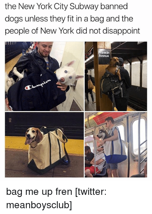 The New York City Subway Banned Dogs Unless They Fit In A Bag And - Nyc subway bans dogs unless fit bag new yorkers reacted