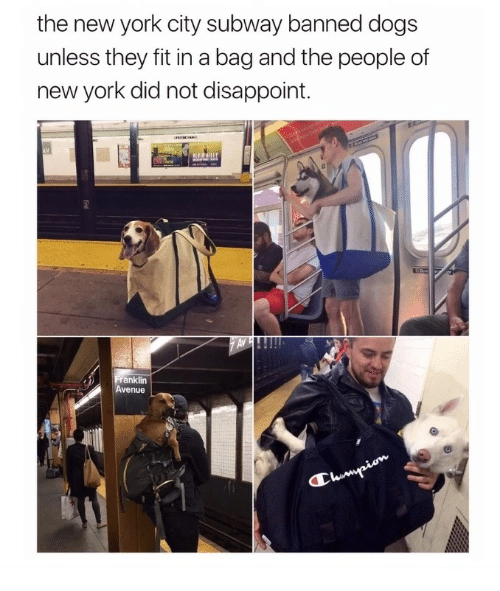 Best Memes About New York City New York City Memes - Nyc subway bans dogs unless fit bag new yorkers reacted