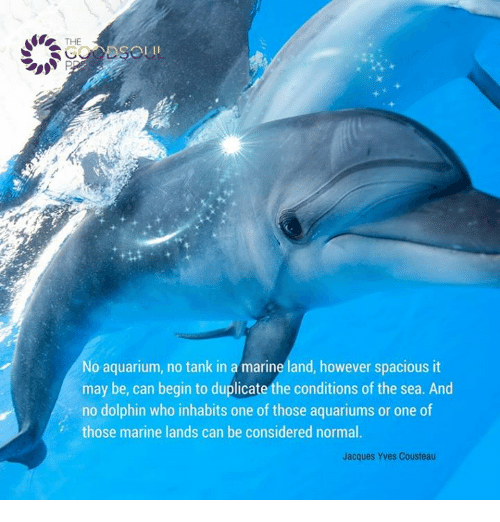 Memes, Aquarium, and Dolphin: THE  No aquarium, no tank in a marine land, however spacious it  may be, can begin to duplicate the conditions of the sea. And  no dolphin who inhabits one of those aquariums or one of  those marine lands can be considered normal.  Jacques Yves Cousteau