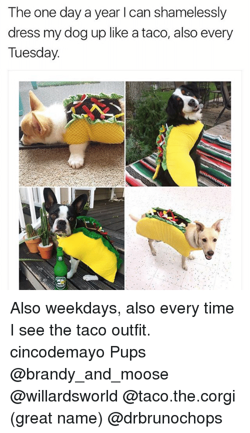 Corgi, Memes, and Dress: The one day a year l can shamelessly  dress my dog up like a taco, also every  Tuesday. Also weekdays, also every time I see the taco outfit. cincodemayo Pups @brandy_and_moose @willardsworld @taco.the.corgi (great name) @drbrunochops