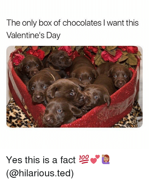 Memes, Ted, and Valentine's Day: The only box of chocolates I want this  Valentine's Day Yes this is a fact 💯💕🙋🏽♀️(@hilarious.ted)