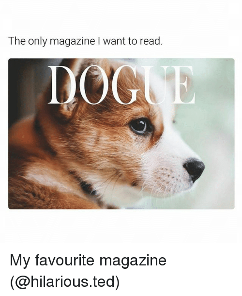 Funny, Ted, and Hilarious: The only magazine I want to read.  DOG My favourite magazine (@hilarious.ted)