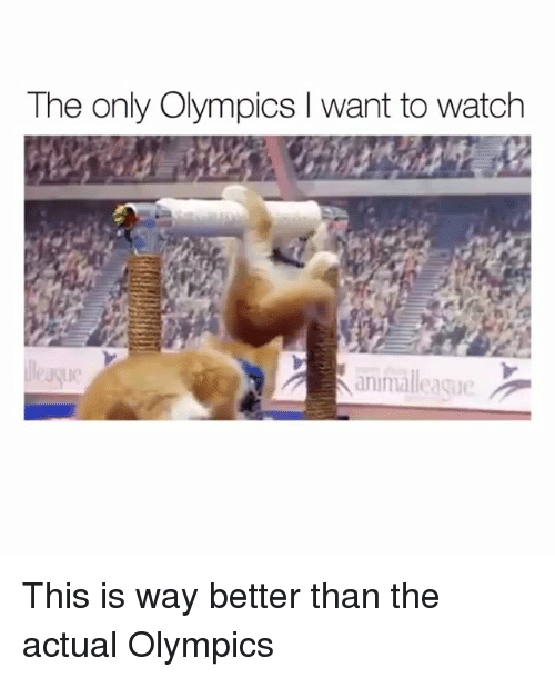 Funny, Watch, and Olympics: The only Olympics I want to watch  ie  animalleaque This is way better than the actual Olympics
