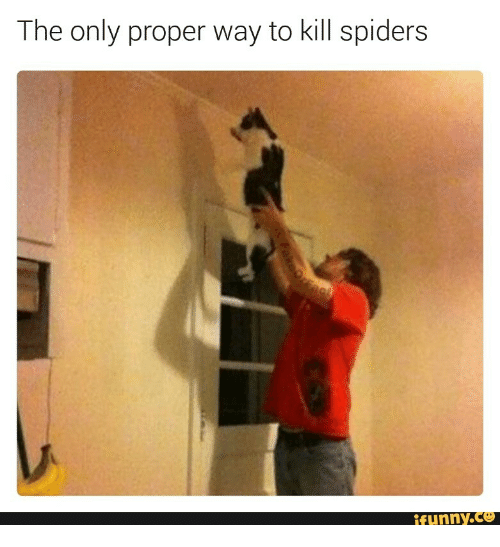 The Only Proper Way To Kill Spiders Funnyce Funny Meme On Me Me