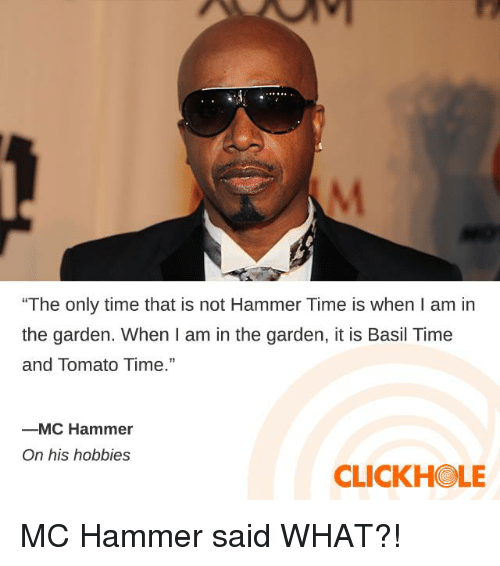"""Dank, MC Hammer, and Time: """"The only time that is not Hammer Time is when I am in  the garden. When I am in the garden, it is Basil Time  and Tomato Time.""""  ーMC Hammer  On his hobbies  CLICKHOLE MC Hammer said WHAT?!"""