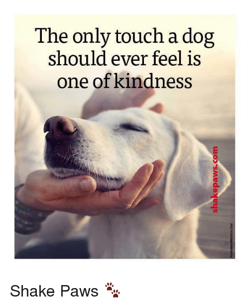 Memes, Kindness, and 🤖: The only touch a dog  should ever feel is  one of kindness Shake Paws 🐾