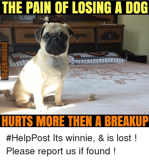 Nepali, Reporting, and  Breakup: THE PAIN OF LOSING A DOG  HURTS MORE THEN A BREAKUP #HelpPost   Its winnie, & is lost ! Please report us if found !