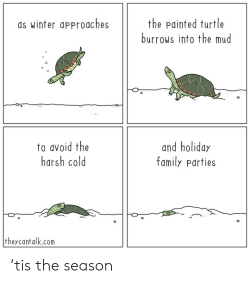 Family, Winter, and Turtle: the painted turtle  burrows into the mud  as winter approaches  to avoid the  harsh cold  and holiday  family parties  theycantalk.com 'tis the season