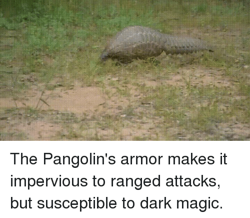 the pangolin s armor makes it impervious to ranged attacks but
