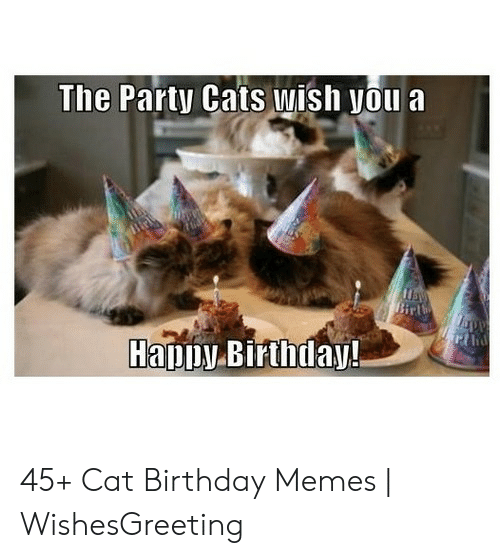 Birthday Cats And Memes The Party Wish You A Birl Rthe Happy