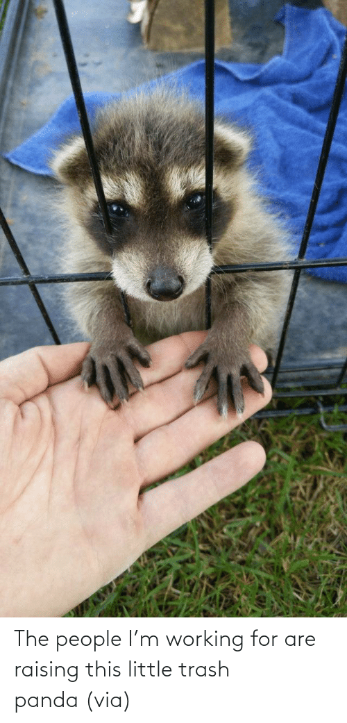 Aww, Reddit, and Target: The people I'm working for are raising this little trash panda(via)