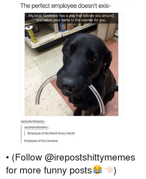 Dank, Local, and The Universe: The perfect employee doesn't exis-  My local hardware has a dog that follows you around,  and takes your items to the counter for you.  tactical tvrtlenecks  southernsideofme  Employee of the Month Every Month  Employee of the Universe • (Follow @irepostshittymemes for more funny posts😂👈🏻)