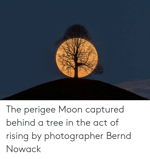 Moon, Tree, and Act: The perigee Moon captured behind a tree in the act of rising by photographer Bernd Nowack