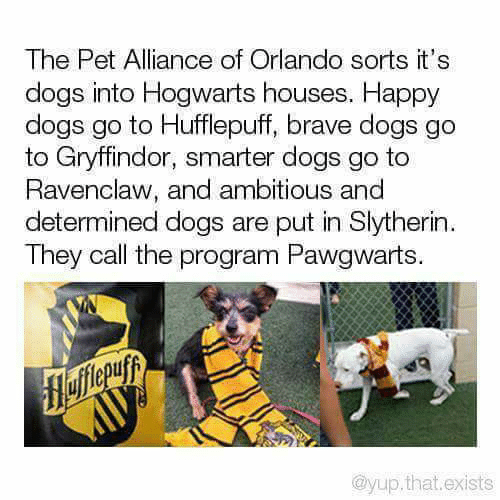 The Pet Alliance of Orlando Sorts It's Dogs Into Hogwarts